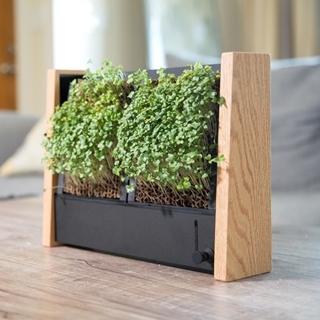 來種個「微蔬菜」框住一抹綠吧,只要澆水10天就能吃!