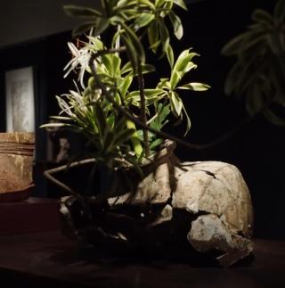 聚集亞洲千百年陶器的盛會 以超脫本位的歷史器物襯托植...