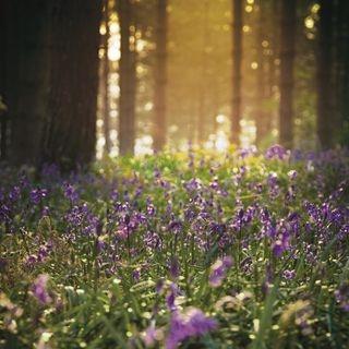 英國皇室御用有機香氛 漫步於風信子森林